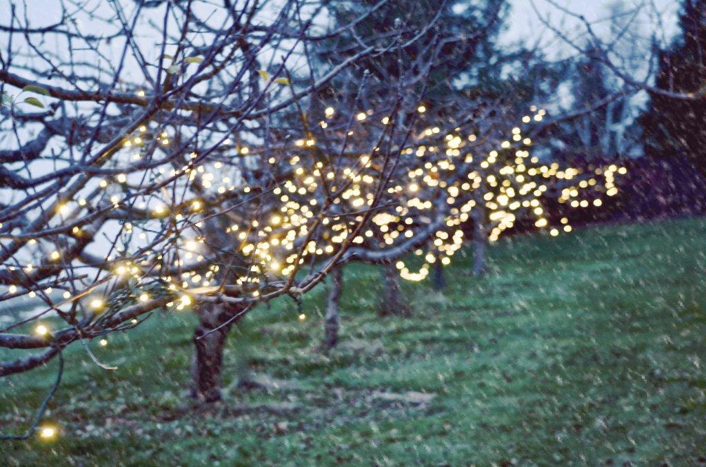 orchard snow