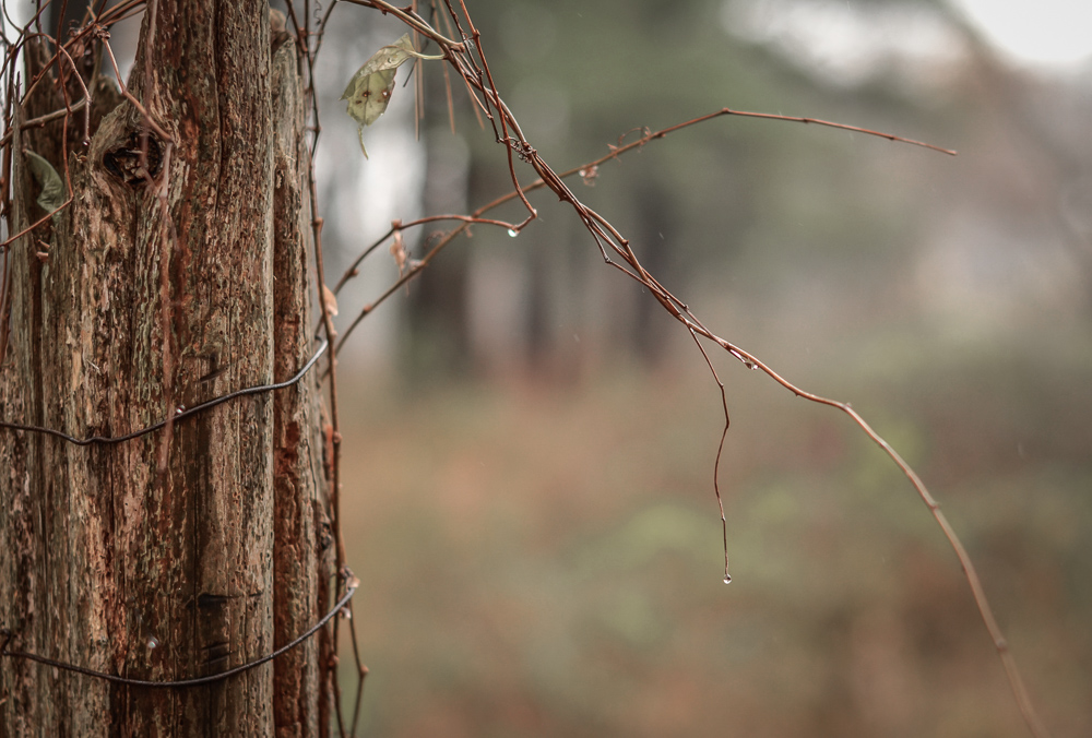 foggy day bokeh2-