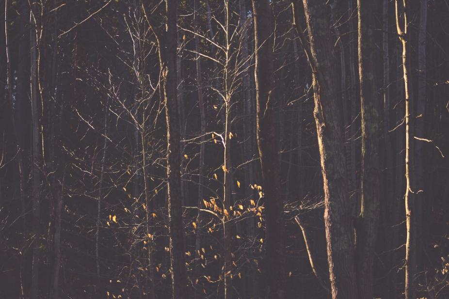 godlight-