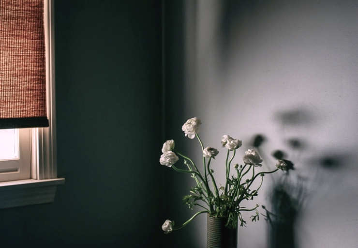 ranunculus shadow